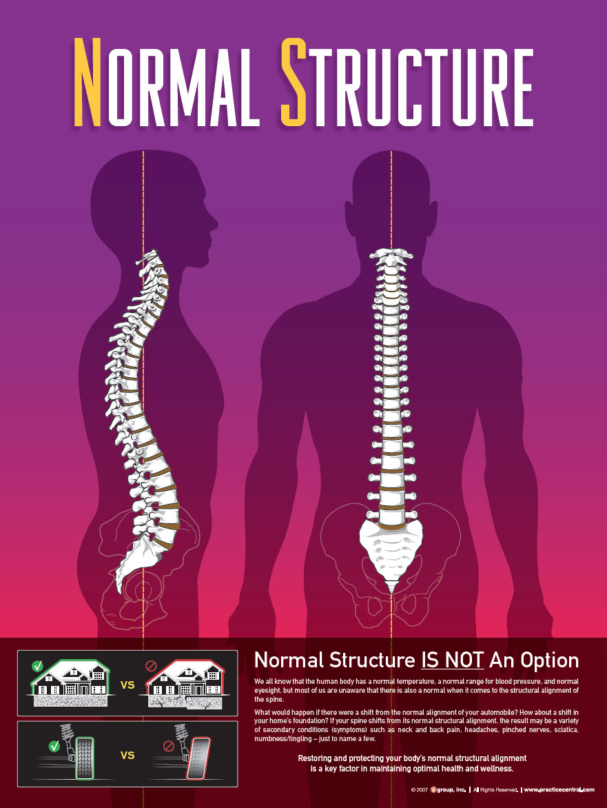 Normal Stucture of Spine